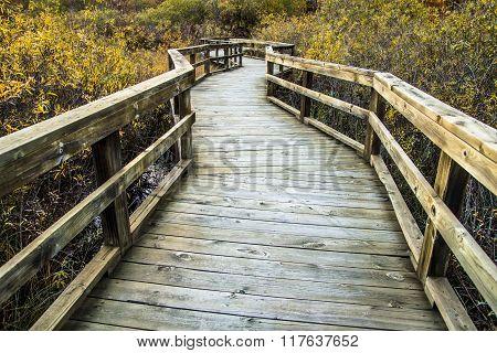 Boardwalk Winds Through A Wetlands Habitat