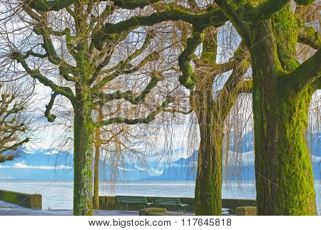 Lausanne quay of Geneva Lake and trees covered by moss in winter Ouchy. Lausanne is a city in Switzerland. Ouchy is a port and popular lakeside resort in Lausanne.