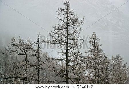 Snow covered Zermatt and fog in winter Switzerland. Zermatt is a municipality in Visp district of the canton Valais.