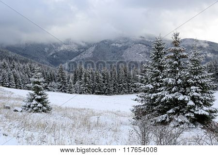 Winter landscape in mountain forest