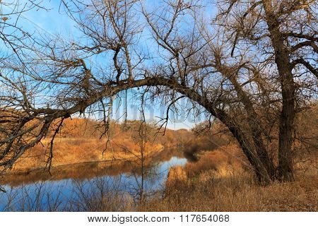 Autumn scene with tree river bank