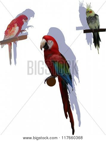 illustration with color parrots isolated on white background