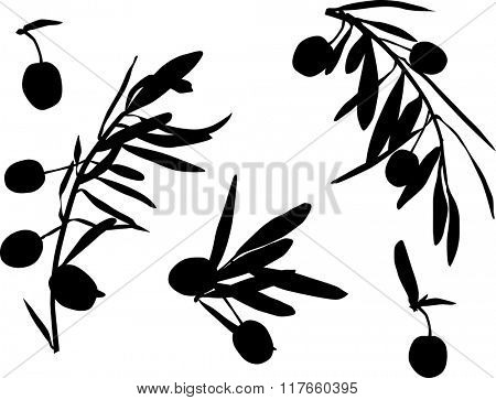 illustration with black olives collection isolated on white background