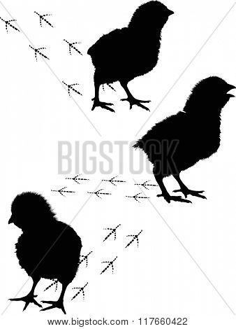 illustration with three newborn chicken silhouettes isolated on white background