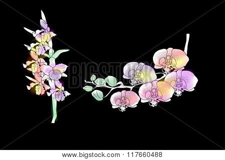 illustration with color orchids on black background
