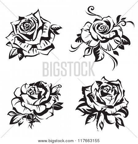 black rose set on white background