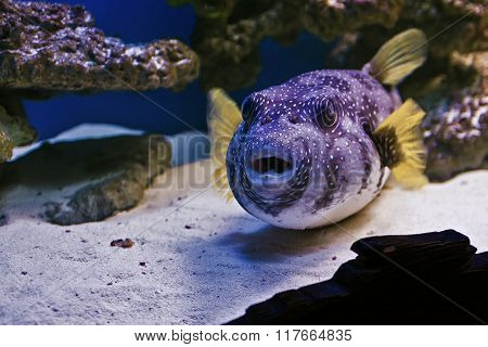 Undersea world, fish and corals