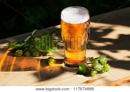 glass of beer with hops on the wooden sun, garden, street, delicious, beautiful, light gold