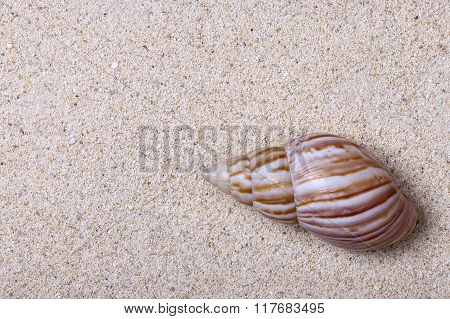 White Sand And A Cockleshell