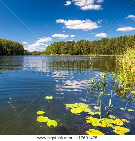 Summer landscape with sunny forest lake