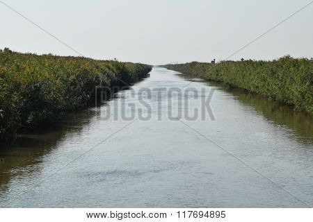 The Main Irrigation Rice Fields