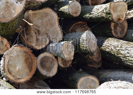 Logs Are Piled In A Heap An Front Of The Sawmill