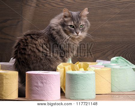 Cat and a lot of toilet paper