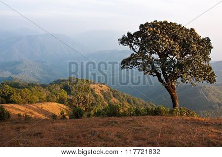 Tree On The Mountainside.