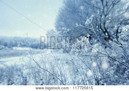 Winter Landscape In Frosty Day