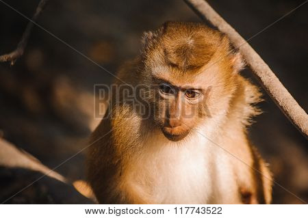 One Cute Baby Monkey