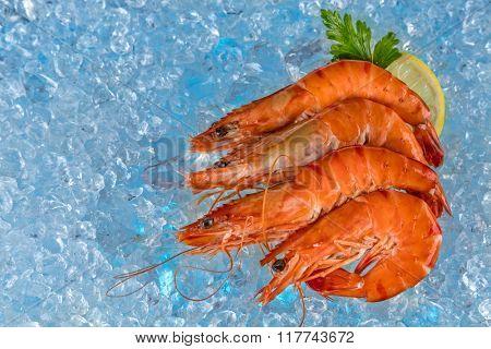 Fresh prawns on ice drift