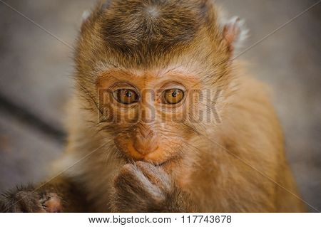 One Cute Baby Monkey Eating