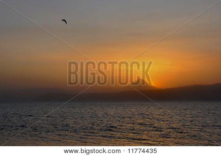 Bird Over Ocean
