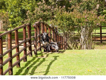 Cows Next To The Wooden Fence