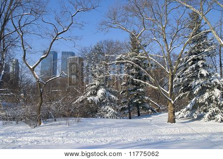 Winter Snow Central Park