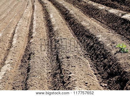 Furrow Plowed Field In The Spring Day