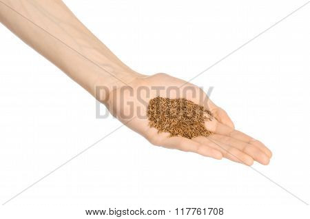 Spices And Cooking Theme: Man's Hand Holding A Bunch Of Dried Cumin Isolated On A White Background I
