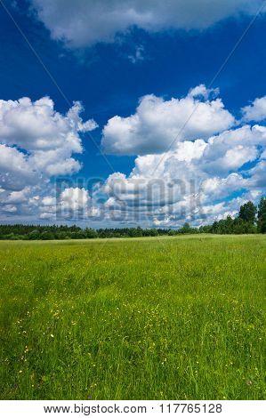 Field Freedom Vibrant Springtime
