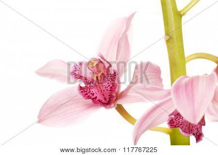 Beautiful fresh pink lily.