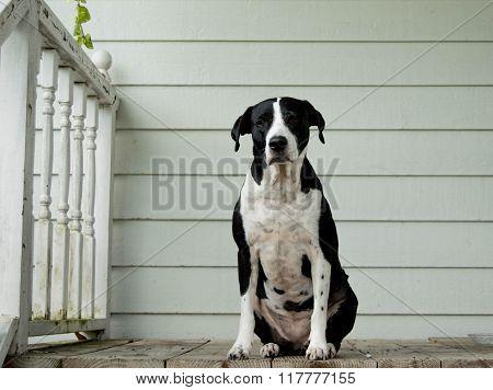 Dog sitting alone on a porch