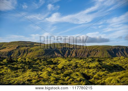 Moss Cover On Volcanic Landscape Of Iceland