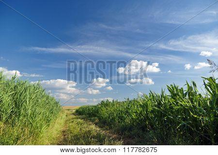 Beautiful field in spring