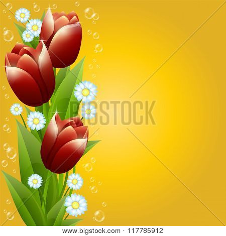 Bouquet Of Tulips And Camomiles