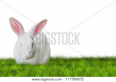 Bunny Easter on grass on white background