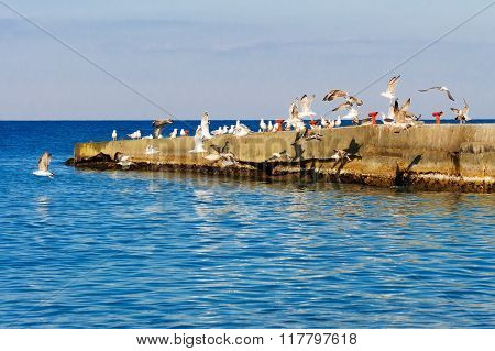 A Flock Of Seagulls Taking Off From The Breakwater