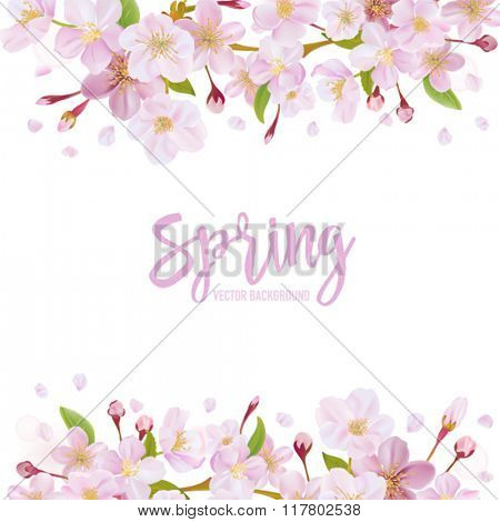 Cherry Blossom Spring Background - in vector