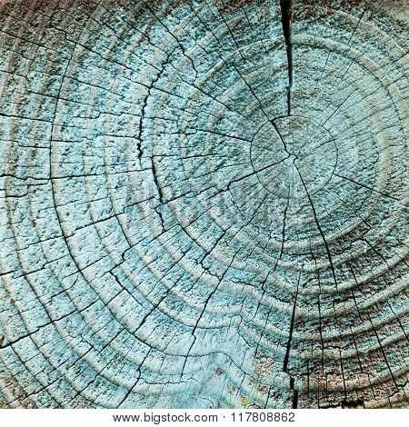 Wood annual rings background