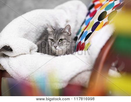 Cat lying on chair with plaid at home