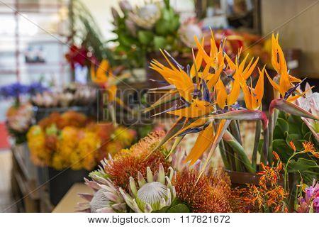 Strelitzia Reginae Flower Closeup (bird Of Paradise Flower). Madeira Island