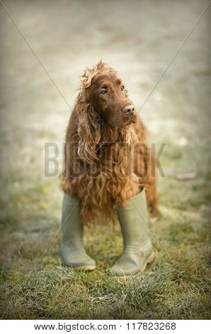 Funny Dog Looking