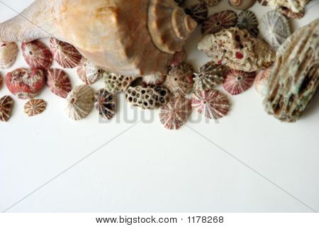 Assorted Shells On Edge Of Page