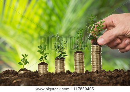 Person Hand Holding Small Plant On Stacked Coins