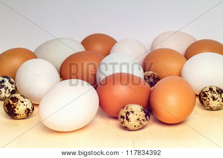 Close Up Duck Egg And Quail Eggs On White Background