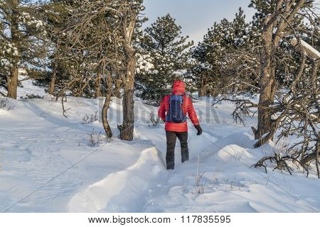 lonely male hiker on trail at Colorado foothills, winter morning with wind a deep snow