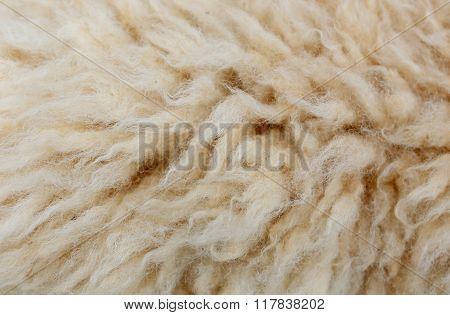 Sheep Fleece For Texture Background