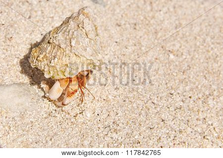 Hermit Crab On The Beach Of A Tropical Island.