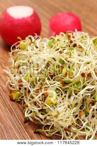 Alfalfa Sprouts And Radish On Wooden Table