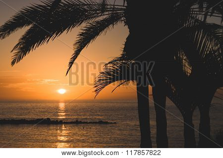 Palm Tree Silhoutte Against Scenic Sunset