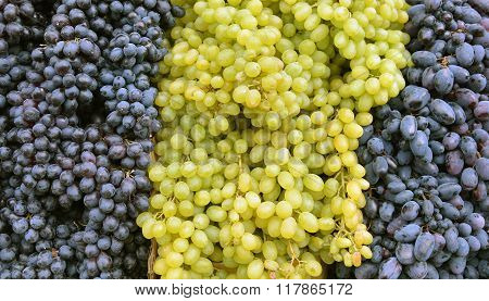 Sultana Grapes Background.