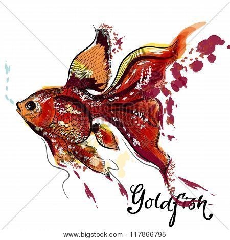 Beautiful Goldfish Isolated On White In Watercolor Style